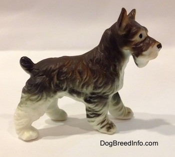 The right side of a bone china grey and white figurine of a Miniature Schnauzer. The figurines ears are arched into the air.