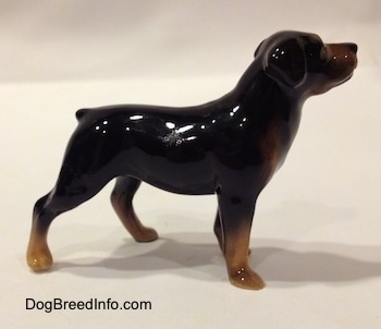 The right side of a brown with black miniature figurine of a Rottweiler. The figurines ears are hard to differentiate from its head.