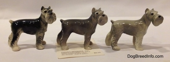 The right side of three Miniature Schnauzer figurines. They are color variations of each figurine.