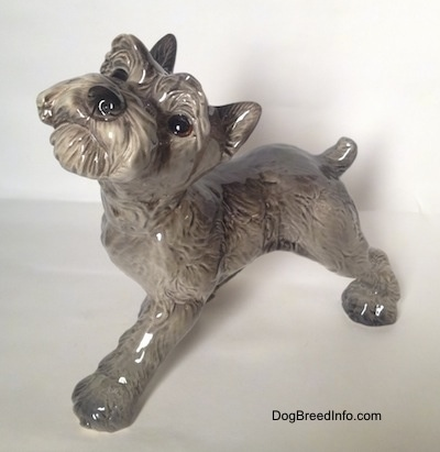Top down view of a grey with white Schnauzer puppy. The figurine is looking up.