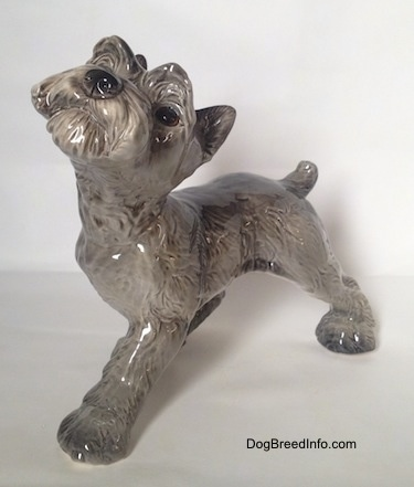 The front right side of a grey with white Schnauzer puppy figurine. The figurine has hair around its muzzle.