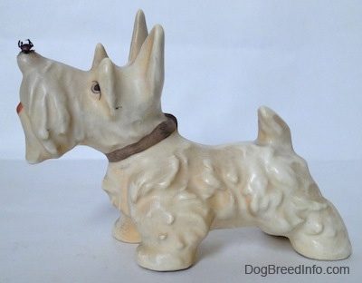 The left side of a white with cream Scottish Terrier with a fly on its nose figurine. The figurine has its long ears in the air.