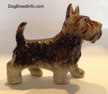 The right side of a brown with white bone china figurine of a Scottish Terrier. The figurine has short legs.