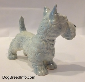 The front right side of a figurine of a white with blue highlights Scottish Terrier. The figurine has detailed hair brushings along its body.