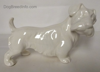 The right side of an unpainted white Sealyham Terrier figurine that is glossy.