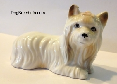 The right side of a white with tan bone china Silky Terrier figurine lying down. The figurine has fine hair details.