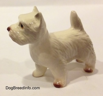 The front left side of a white with tan West Highland Terrier figurine. The figurine has short standing triangular ears.