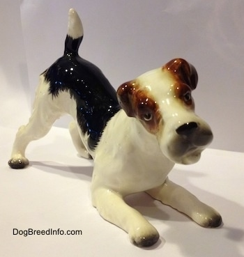 The front right side of a black and white with brown porcelain Wire Fox Terrier figurine that is in a play bow pose. The figurine is glossy.