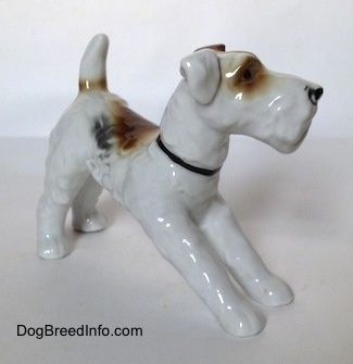 The front right side of a white with black and brown Wire Fox Terrier figurine. The figurine has flopped over ears. One ear is brown and the other is white.