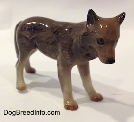 The front right side of a brown with tan figurine of a Wolf. The Wolf is glossy.