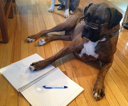 A brown brindle Boxer dog laying down on a hardwood floor wearing reading glasses with his paw on a book that says Bruno I like food, Give me food